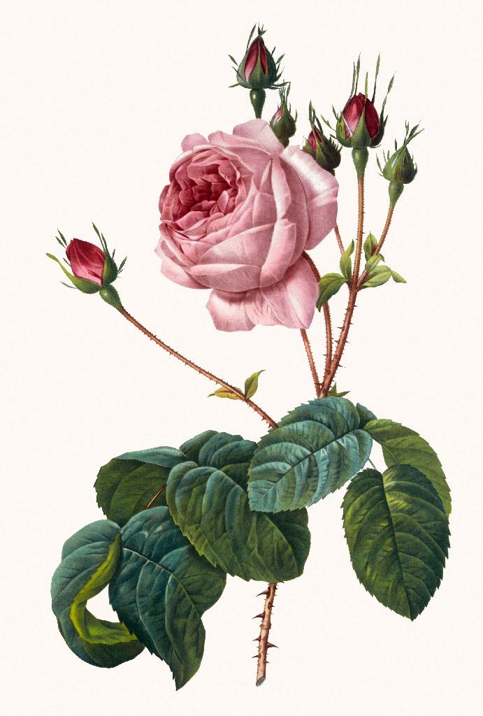 Репродукция картина - Винтажная роза