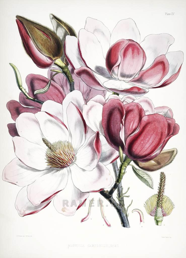 Репродукция картина - для коллажа на стену - экзотическая флора