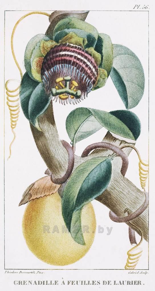 Репродукция картина - для коллажа на стену - экзотическая флораРепродуция для коллажа на стену - экзотическая флора